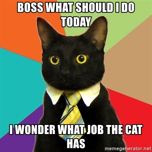 Business Cat - BOSS WHAT SHOULD I DO TODAY I WONDER WHAT JOB THE CAT HAS