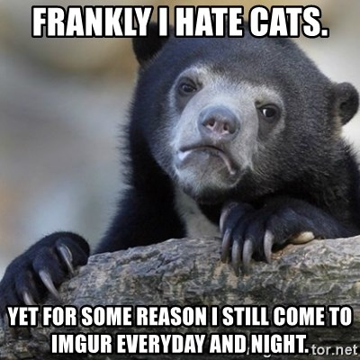 Confession Bear - Frankly I hate Cats. Yet for some reason I still Come To Imgur Everyday and Night.
