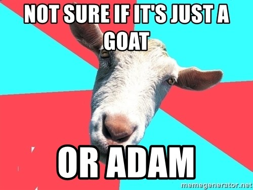 Oblivious Activist Goat - not sure if it's just a goat or adam