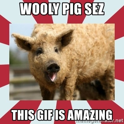 Wooly Pig - Wooly pig sez this gif is amazing