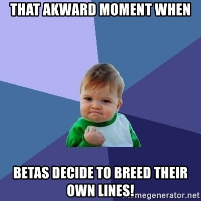Success Kid - THAT AKWARD MOMENT WHEN bETAS DECIDE TO BREED THEIR OWN LINES!