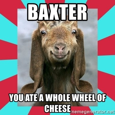 Gloating Goat - Baxter you ate a whole wheel of cheese