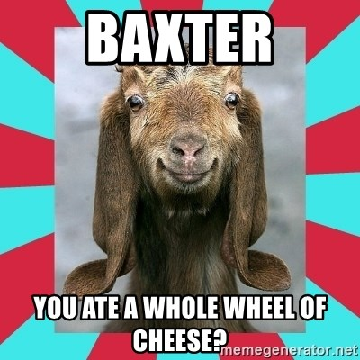 Gloating Goat - baxter you ate a whole wheel of cheese?