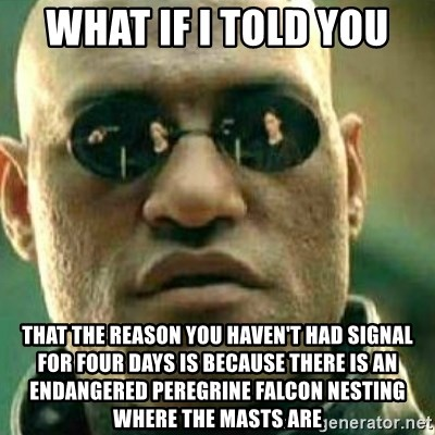 What If I Told You - what if i told you THAT THE REASON YOU HAVEN'T HAD SIGNAL FOR FOUR DAYS IS BECAUSE THERE IS An endangered PEREGRINE FALCON NESTING WHERE THE MASTS ARE