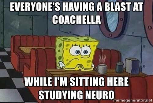Coffee shop spongebob - everyone's having a blast at coachella while i'm sitting here studying neuro