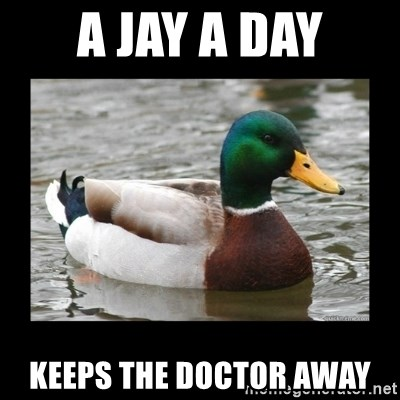 advice mallard - a jay a day keeps the doctor away