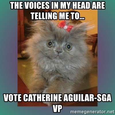cute cat - The voices in my head are telling me to... vote catherine aguilar-sga vp