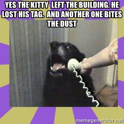 Yes, this is dog! - YES THE KITTY  LEFT THE BUILDING. HE LOST HIS TAG.  AND ANOTHER ONE BITES THE DUST