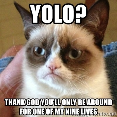 Grumpy Cat  - yolo? thank god you'll only be around for one of my nine lives