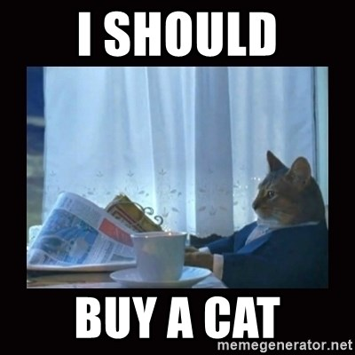 i should buy a boat cat - I should Buy a cat