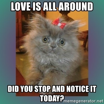 cute cat - Love is all around Did you STOP and NOTICE it today?