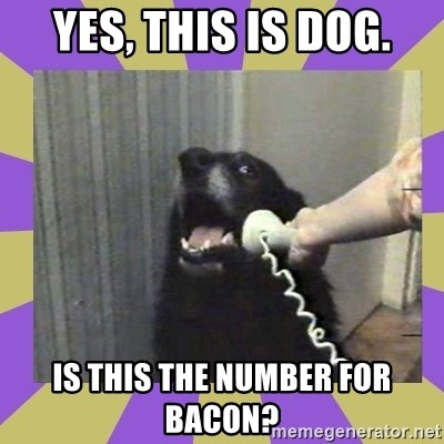 Yes, this is dog! - yes, this is dog. is this the number for bacon?