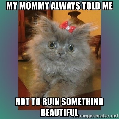 cute cat - my mommy always told me not to ruin something beautiful