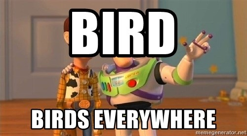 Consequences Toy Story - Bird birds everywhere