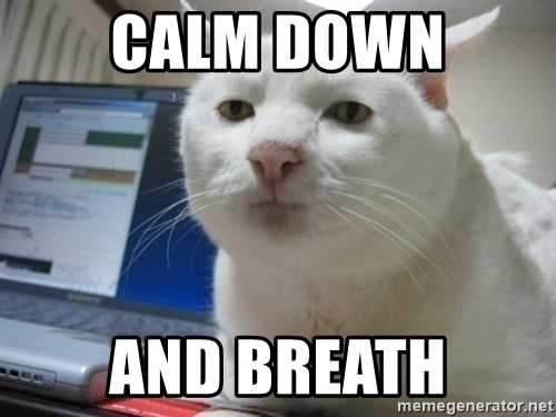 Serious Cat - calm down and breath