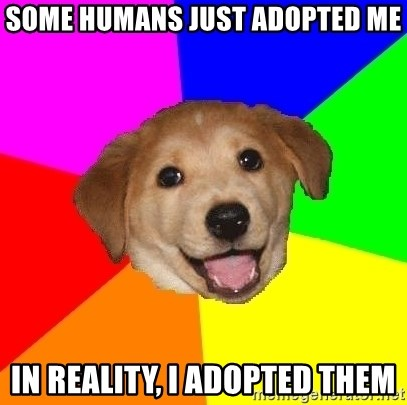 Advice Dog - Some humans just adopted me In reality, I adopted them