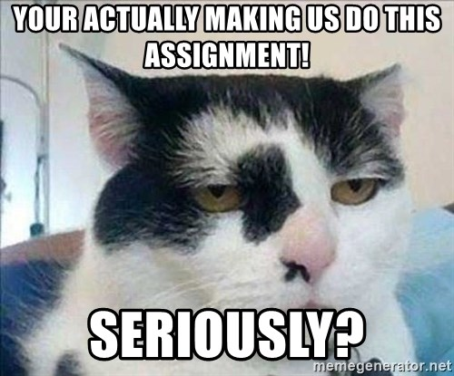 Serious Cat - your actually making us do this assignment! seriously?
