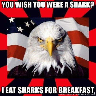 Bald Eagle - You wish you were a shark? I eat sharks for breakfast