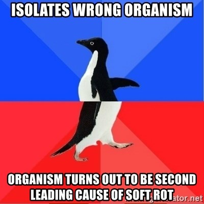 Socially Awkward to Awesome Penguin - Isolates Wrong Organism Organism turns out to Be Second Leading Cause of Soft Rot
