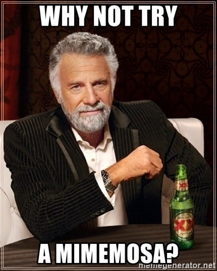 Dos Equis Guy gives advice - why not try a mimemosa?