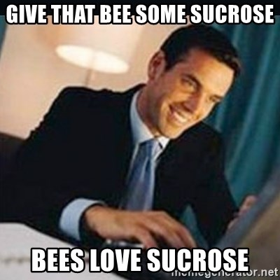 bitches love x - Give that bee some sucrose bees love sucrose