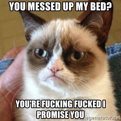 Grumpy Cat  - you messed up my bed? You're fucKing fucked I promise you