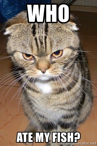 angry cat 2 - who ate my fish?
