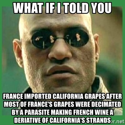 Matrix Morpheus - What if I told you France imported California grapes after most of France's grapes were decimated by a parasite making french wine a deriative of california's strands
