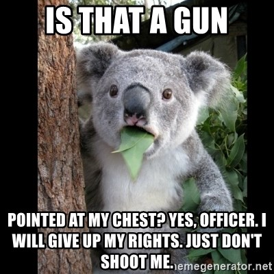 Koala can't believe it - Is that a gun pointed at my chest? Yes, Officer. I will give up my rights. Just don't shoot me.