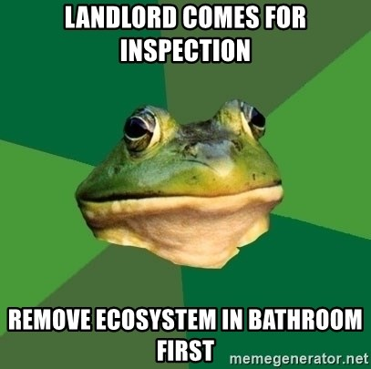 Foul Bachelor Frog - landlord comes for inspection remove ecosystem in bathroom first