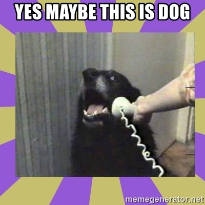 Yes, this is dog! - YES MAYBE THIS IS DOG