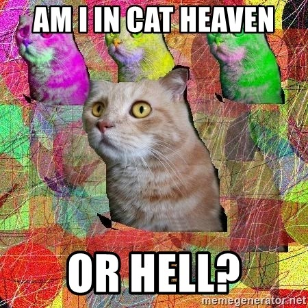 A Cat - am i in cat heaven or hell?