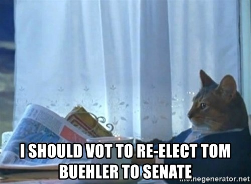 Sophisticated Cat -  I should vot to re-elect tom buehler to Senate
