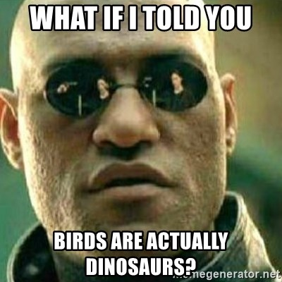 What If I Told You - What if I told you birds are actually dinosaurs?