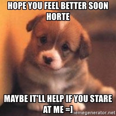 cute puppy - HOPE YOU FEEL BETTER SOON HORTE  maybe it'll help if you stare at me =]