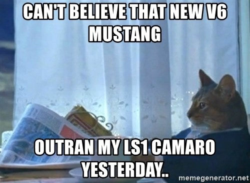newspaper cat realization - Can't believe that new v6 mustang outran my Ls1 Camaro yesterday..