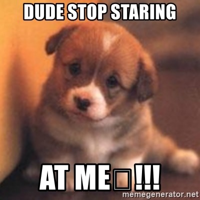 cute puppy - DUDE STOP STARING AT ME🔥!!!