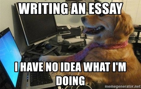 I have no idea what I'm doing - Dog with Tie - writing an essay I have no idea what I'm doing