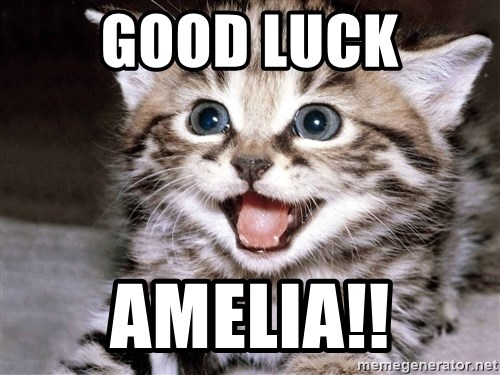 HAPPY KITTEN - GOOD LUCK AMELIA!!