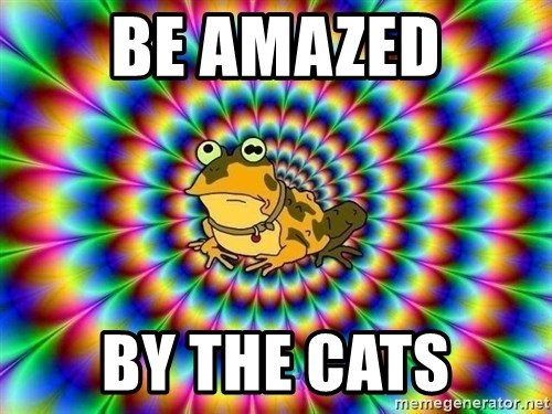 hypno toad - be amazed by the cats