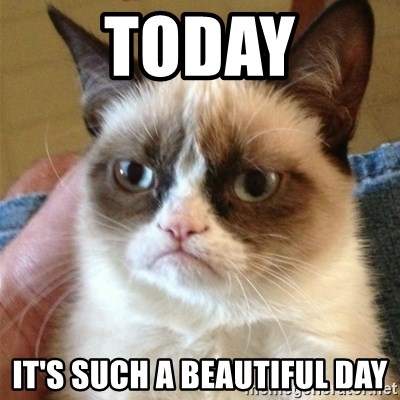 Grumpy Cat  - Today It's such a beautiful day