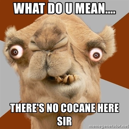 Crazy Camel lol - WHAT DO U MEAN.... THERE'S NO COCANE HERE SIR