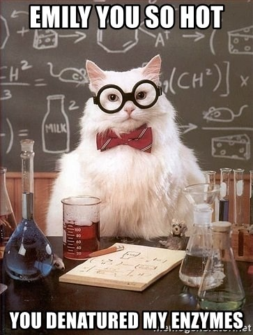 Chemistry Cat - EMILY YOU SO HOT  YOU DENATURED MY ENZYMES