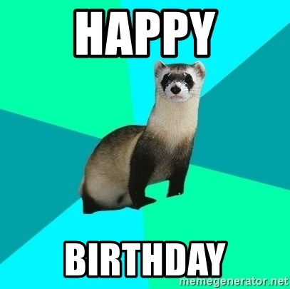 Obvious Question Ferret - Happy Birthday