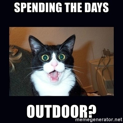 shocked cat - Spending the days outdoor?