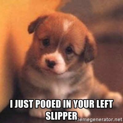 cute puppy -  I just pooed in your Left slipper