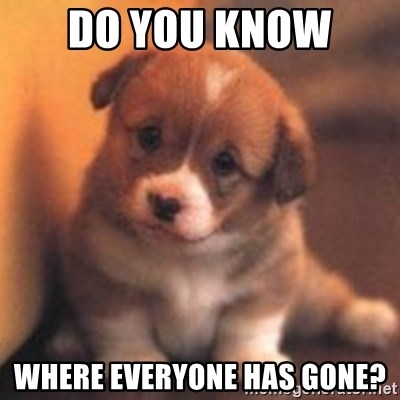 cute puppy - do you know  where everyone has gone?