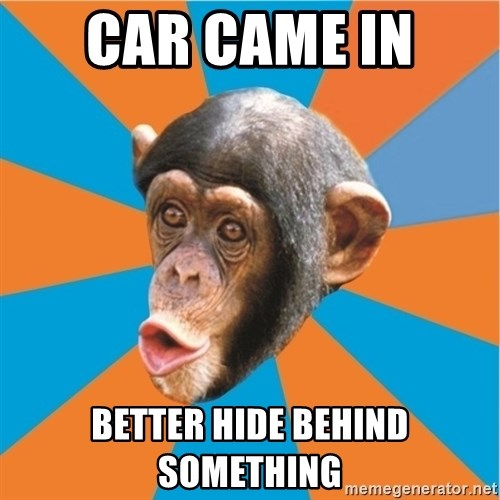 Stupid Monkey - CAR CAME IN  BETTER HIDE BEHIND SOMETHING