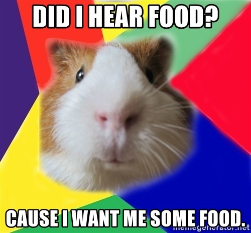 Typical guinea pig - DID I HEAR FOOD? CAUSE I WANT ME SOME FOOD.