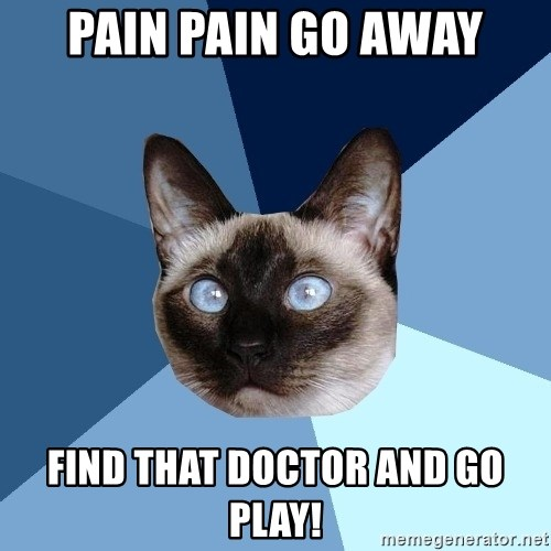Chronic Illness Cat - Pain pain go away Find that doctor and go play!